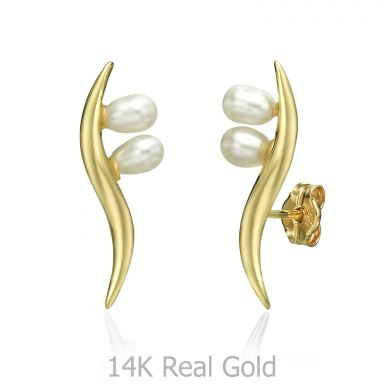 14K Yellow Gold Women's Earrings - Northern Star